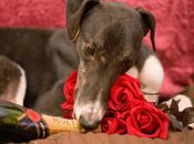 Doggy Date Night: Include Your Valentine's Celebration