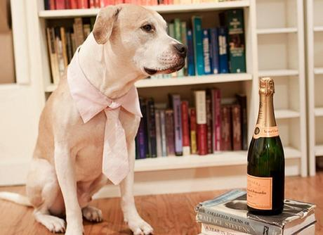 Doggy date night: How to include your dog in your Valentine's Day celebration