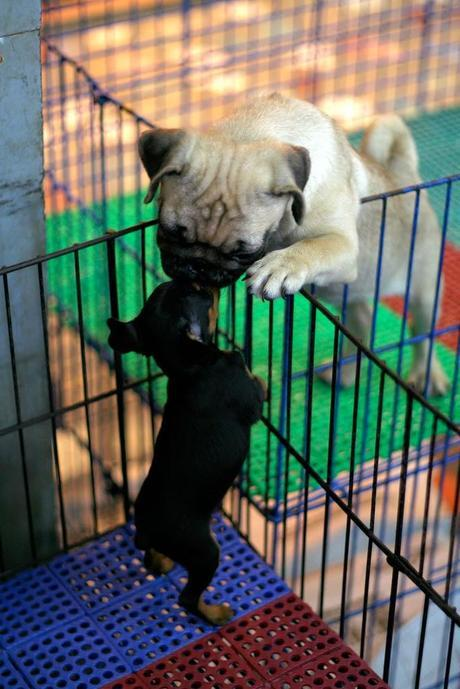 Photos: Puppy kisses for Valentine's Day