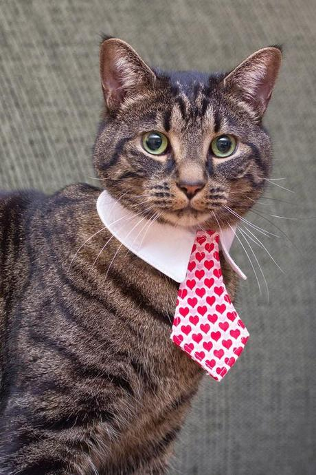 Photos: Festive felines share the love this Valentine's Day