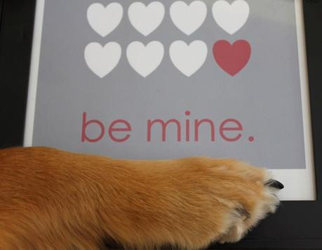 8 Ways Dogs Make Better Valentines Than People