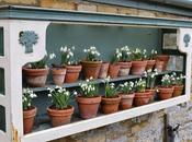 Snowdrop Time Easton Walled Gardens