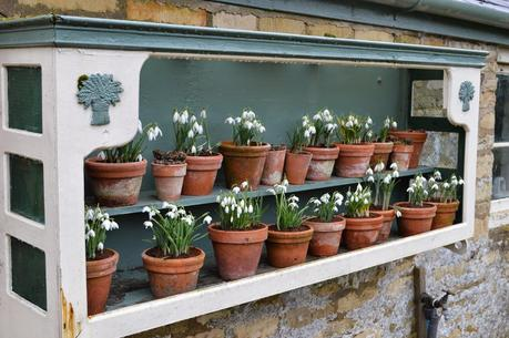Snowdrop time at Easton Walled Gardens