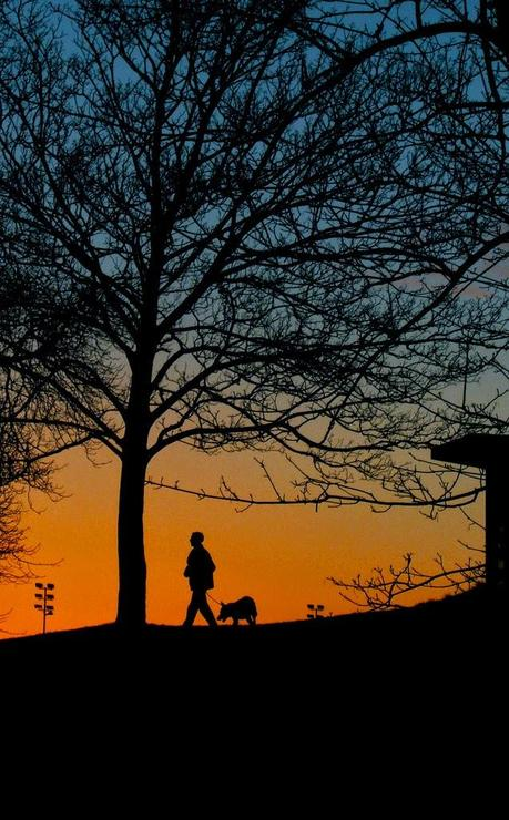 February 22 is Walk the Dog Day