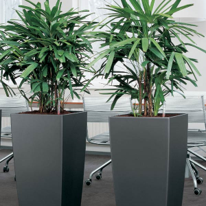 Genial The Benefits Of Indoor Plants In Office Spaces