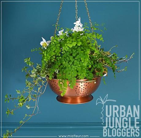 Urban Jungle Bloggers- Hanging Planters
