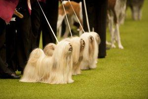 21 Reasons Why You Should Definitely Watch Crufts 2015
