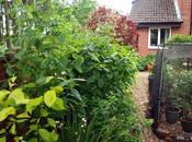 Pruning Dogwood Shrubs