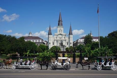 Carriage rides in NOLA