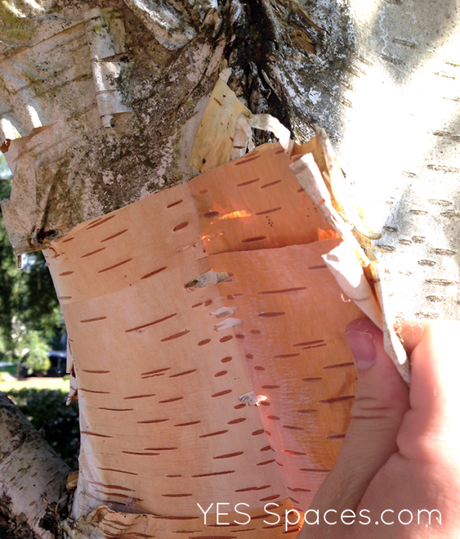 DIY a Birch Bark Lamp