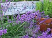 Edible Flowers Garden Design