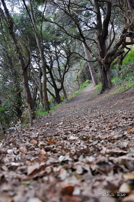 Cliff Walking: St Peter Port to Fermain Trail