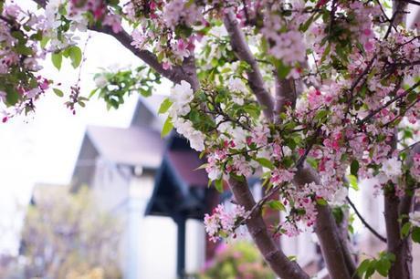 architecture-in-art-apple-blossoms