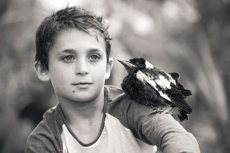 penguin-magpie-rescue-friendship-bloom-family-australia-3