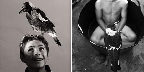 penguin-magpie-rescue-friendship-bloom-family-australia-28