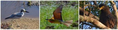 birdhoriz