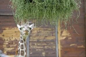 Photo (and video) Essay – Leipzig Zoo