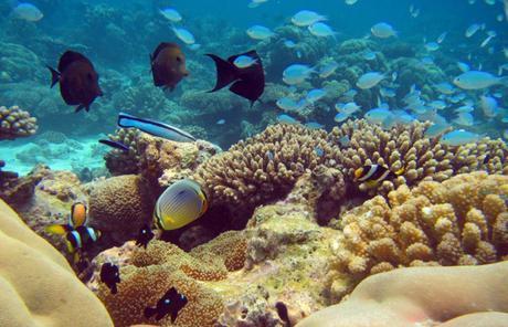 Uligan reef