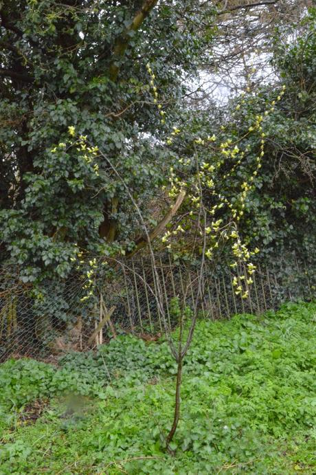 Tree Following - the Quince-whisperer