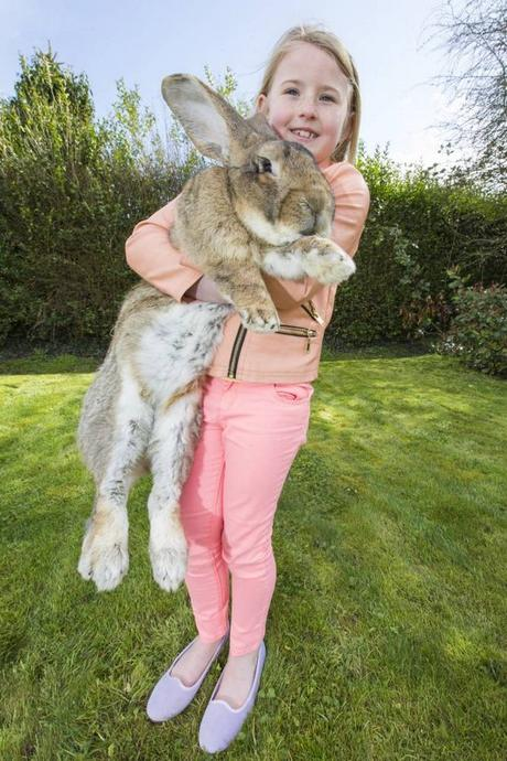 giant-rabbit-son-3