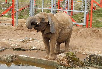 ekstra ark side 6 Lintrup zoo