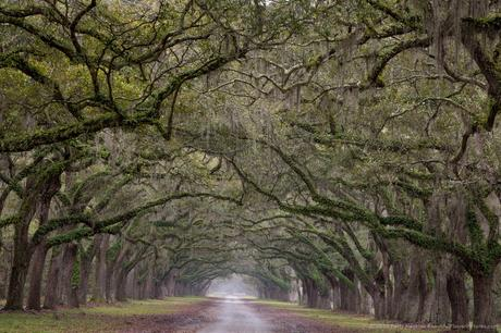 Oak Alley at Wormsloe Historic Site, GA © 2015 Patty Hankins