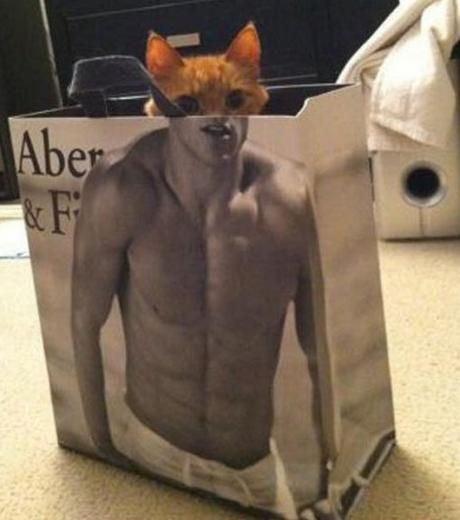 Top 10 Images of Abercrombie Cats