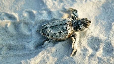 Swim with the Sea Turtles