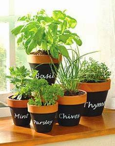 Herbs in a pot
