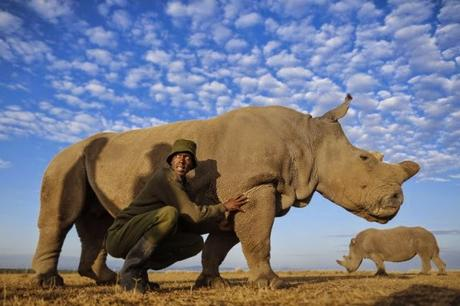 Sudan in Kenya !! ~ the last hope for Northern white rhino species