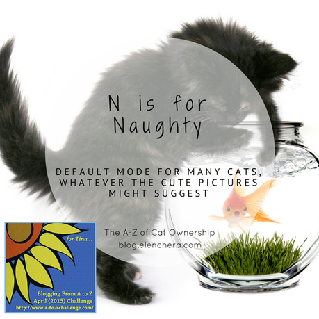 A-Z of Cats: N is for Naughty (#AtoZChallenge)