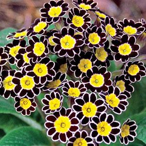 13 Beautiful And Easy Perennials For Shade And Sun Paperblog