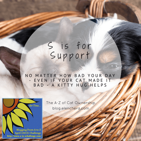 A-Z of Cats: S is for Support (#AtoZChallenge)