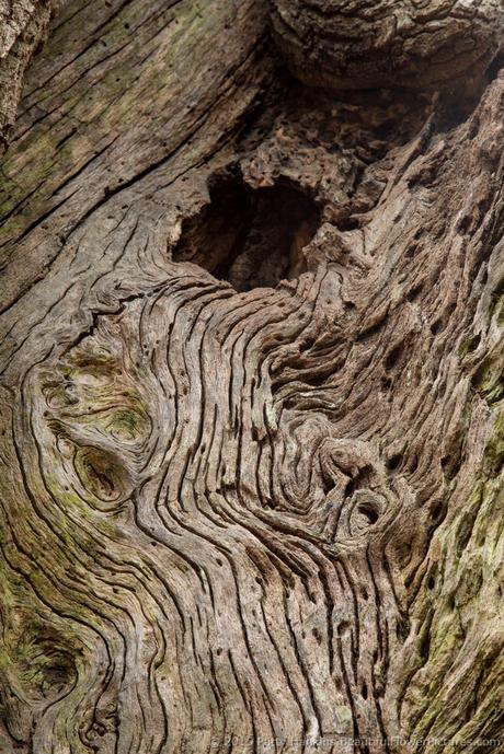 Wood Textures © 2015 Patty Hankins