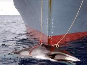 Declining Viability Whaling