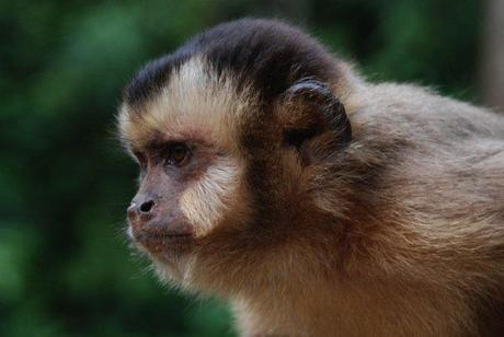 Primates as pets, delving a little deeper