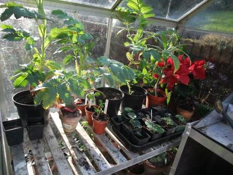 The Greenhouse Year – January