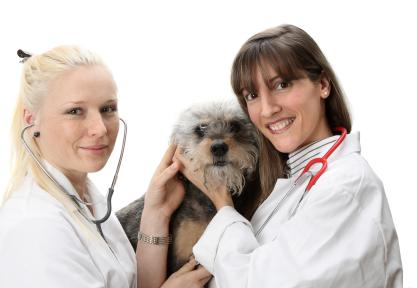 Guidelines for Buying Pet Insurance