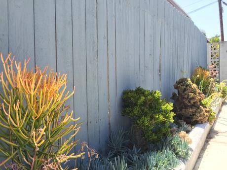 Succulents-Blue-Fence-Garden-Landscaping-California-Drought-Resistant-Tolerant-Plants-Foliage-Side-Yard-Beach-House