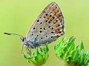 Complete Facts Trivia About Butterflies 05/10
