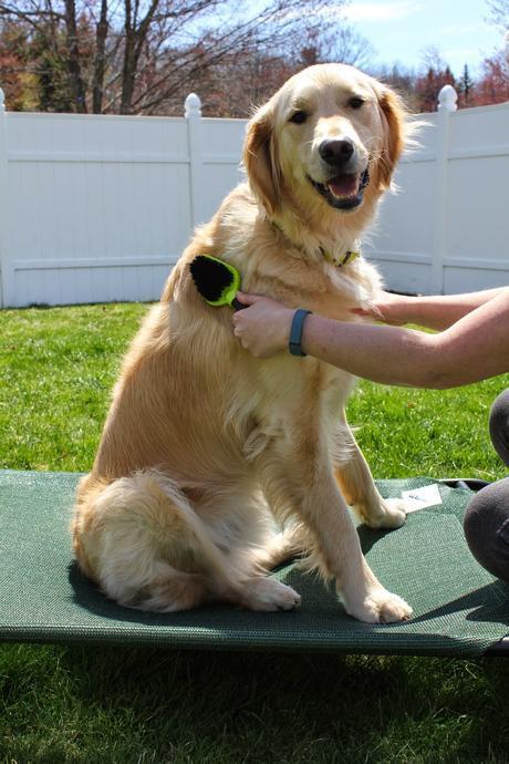 dog grooming FURminator dual brush for dogs