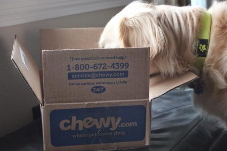 dog looking in chewy.com box