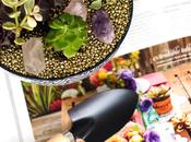 DIY: Succulent Garden Blondielocks