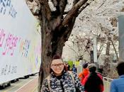 Falling Love With Cherry Blossoms Seoul