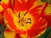 Sunny Spring Photos