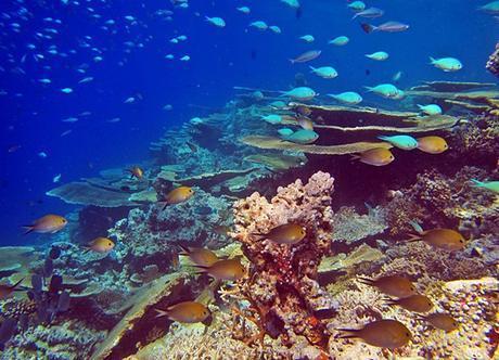 reef random