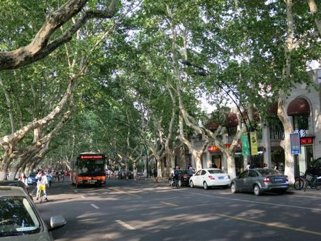 Hangzhou trees  Mint Mocha Musings