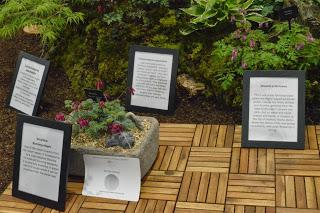 The RHS Malvern Spring Festival - what caught my eye (Part 2)