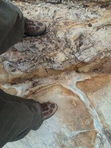 My right foot in the Ediacaran; my left in the Cambrian; 10 million years between my legs. © CJA Bradshaw