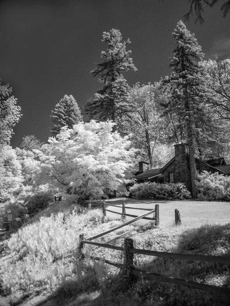 InfraRed Image 1